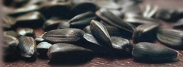 Семечки при грудном вскармливании: можно ли кормящей маме жареные и тыквенные семечки в период ГВ