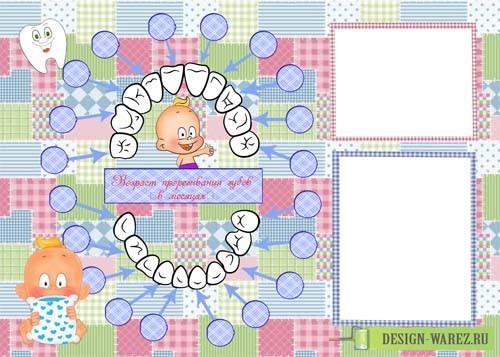 kalendar' prorezyvaniya zubov