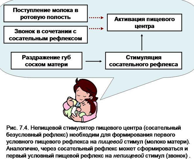 сосательный рефлекс у новорожденных