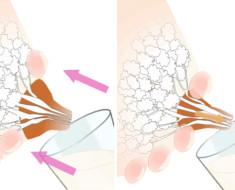 Как сцеживать грудное молоко руками