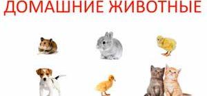 Учим домашних животных