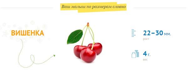 плод-размером-с-вишенку