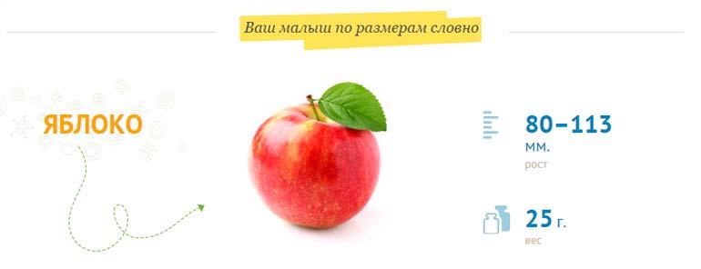 Размер плода 13-14 недель беременности