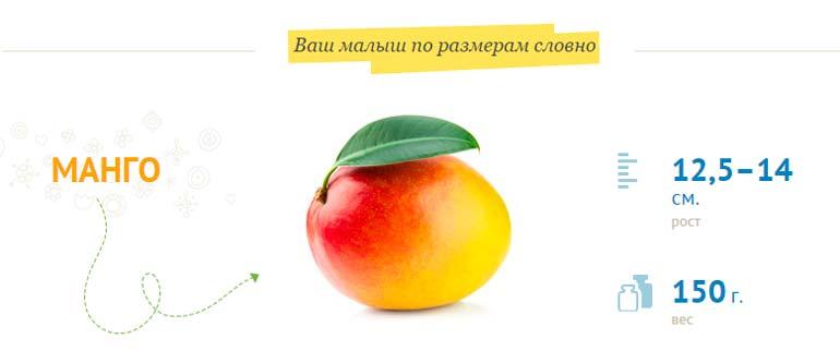 рост  плода 12,5–14 см, вес 150 г.