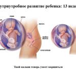 12 13 недель беременности