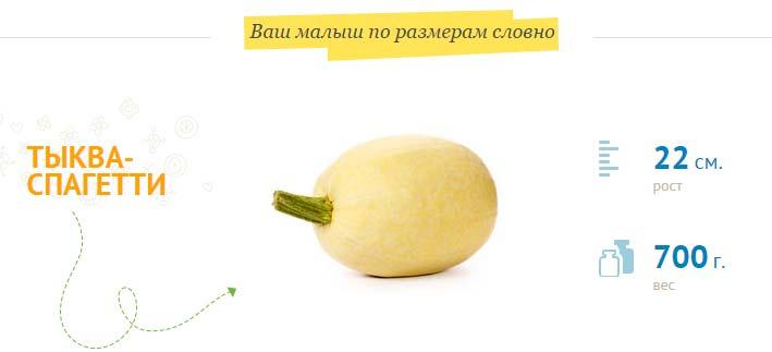 размер плода на 25 неделе беременности