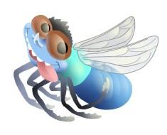 рисунок мухи