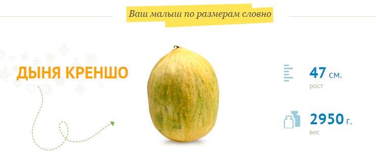 размер-плода-на-37-неделе