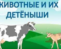 Как-говорят-животные