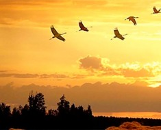 почему птицы улетают на юг