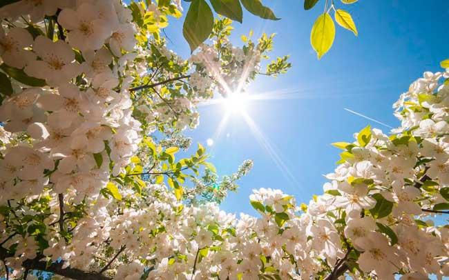 Как улучшить самочувствие и поднять тонус весной