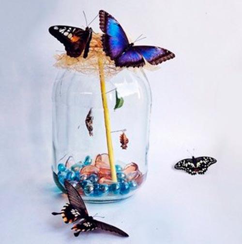 Бабочкарий