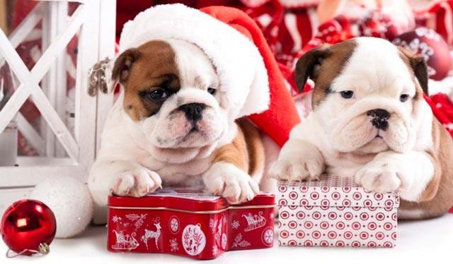 подарить ребенку на новый год собаку