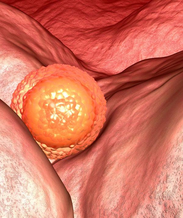 4-неделя-эмбрион