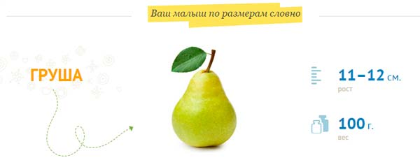рост плода 11–12 см, вес 100 г