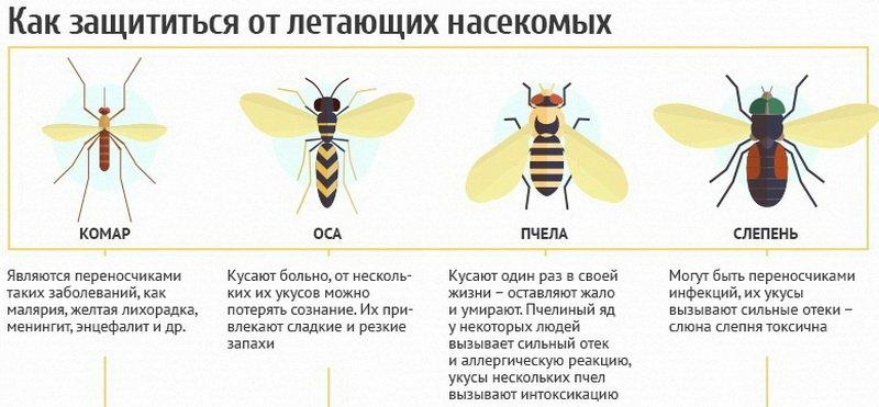 как защититься от летающих насекомых-1