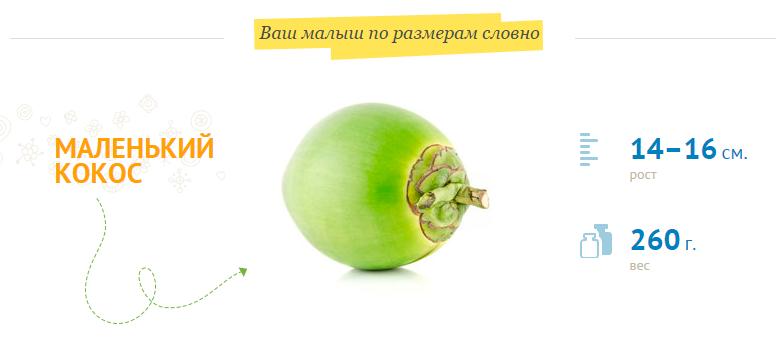 размер-плода-на-20-неделе