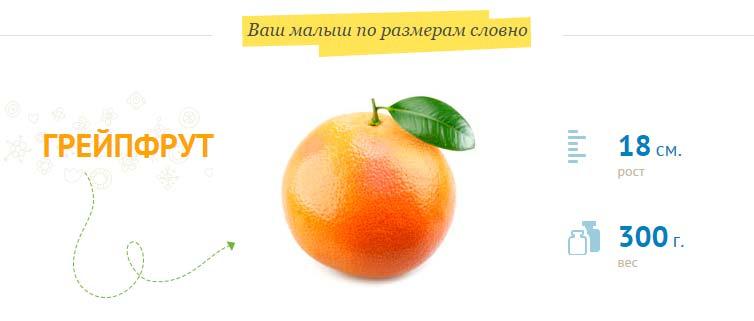 размер плода на 21 неделе