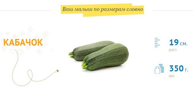размер плода на 22 неделе
