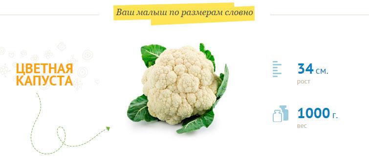 размер плода на 27 неделе беременности рост 34 см, вес 1 кг