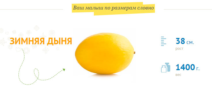 размер-плода-на-30-неделе-беременности