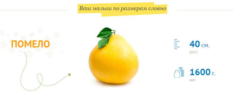 размер-плода-на-31-неделе-беременности 40 см рост 1600 грамм вес