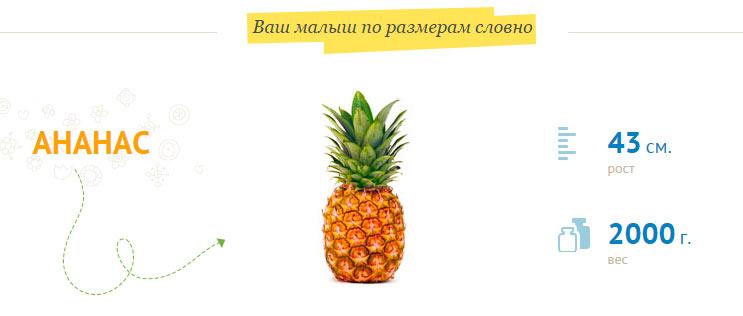 размер-плода-на-33-неделе