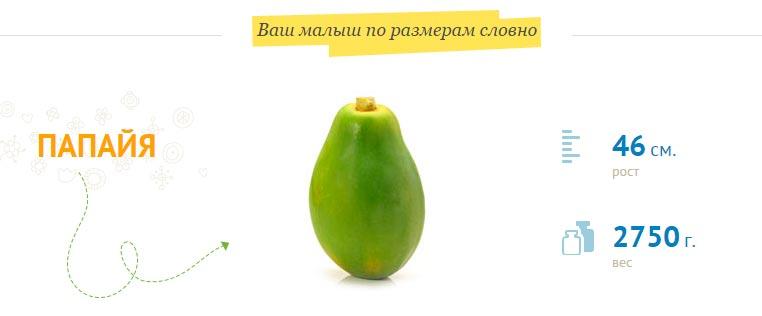 размер-плода-на-36-неделе-беременности