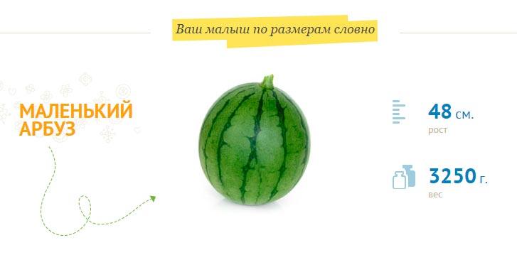размер-плода-на-39-неделе