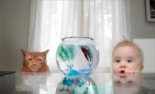 рыбки в аквариуме для ребенка