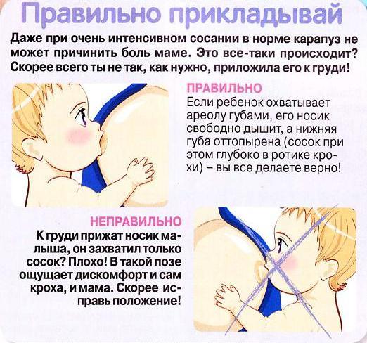 правильное прикладывание к груди