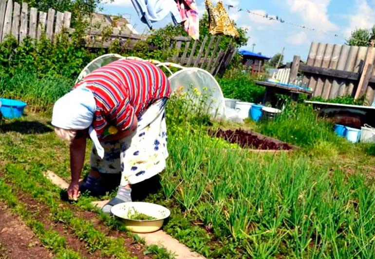 бабушка трудится в огороде